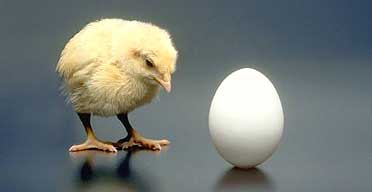 Which comes first, the chicken or the egg? Er, I mean cardio or strength training?